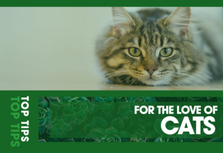 2020   article   top tips   1   cats 01