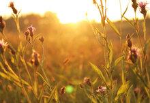 Rsz flowers sunrise