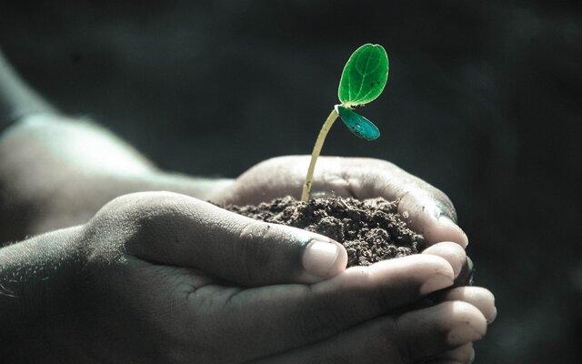 Hands holding soil with a seedling in it