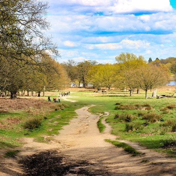 An image of Richmond Park