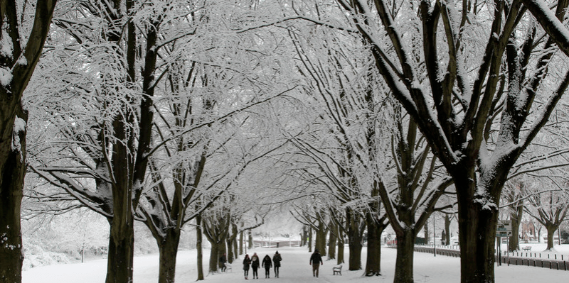 corridor of snow covered trees with a group of people sillhouetted walking through them in the distance