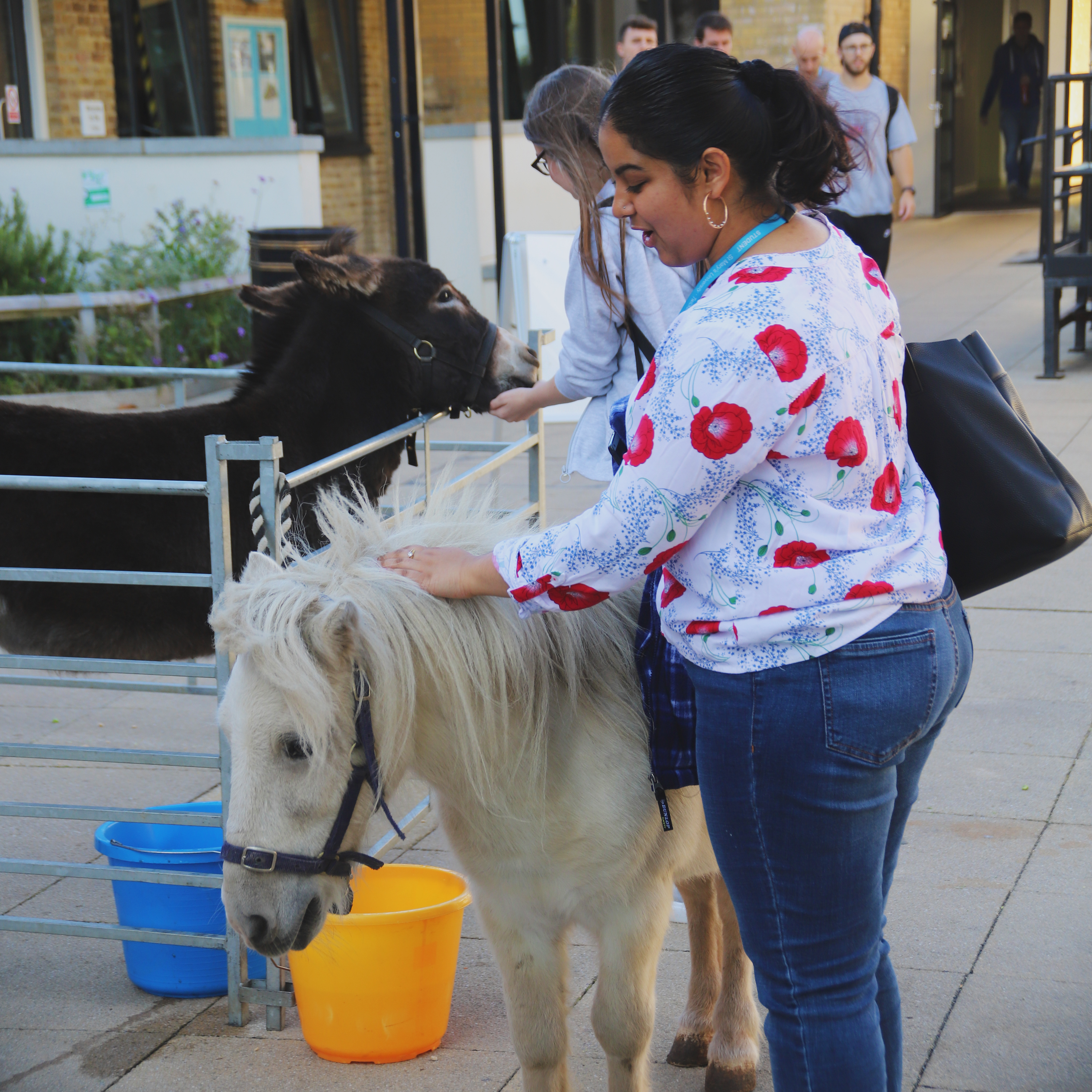 Students enjoying the petting zoo from Freshers 2019