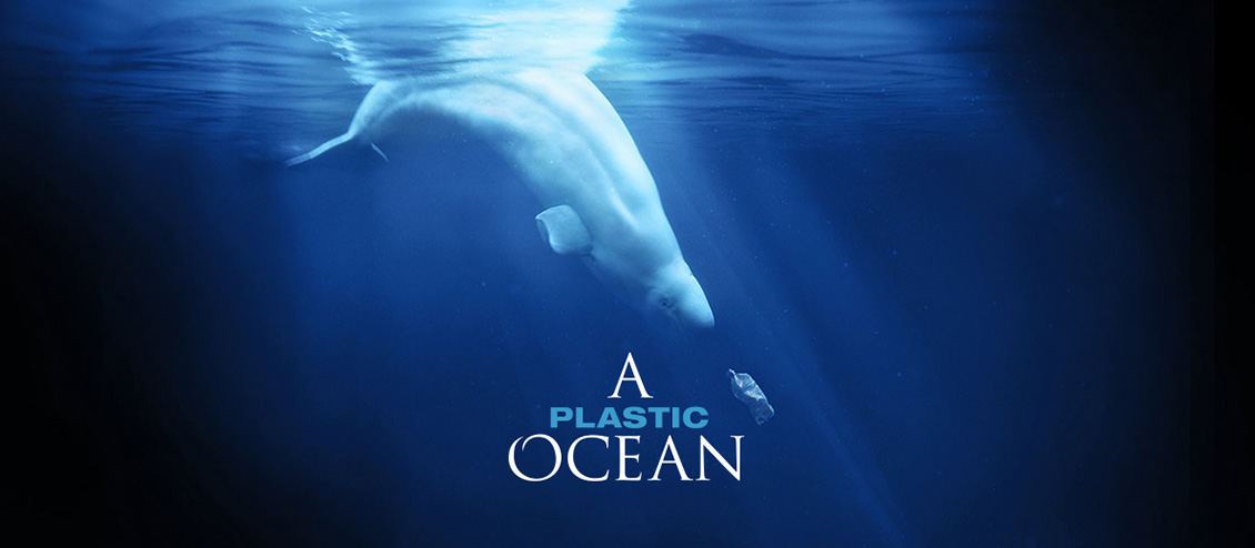 Documentary Poster. Beluga whale playing with a plastic bottle surrounding the documentary title, A Plastic Ocean