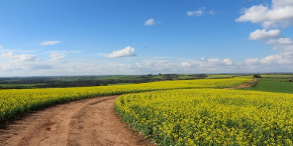 Countryside 592x296