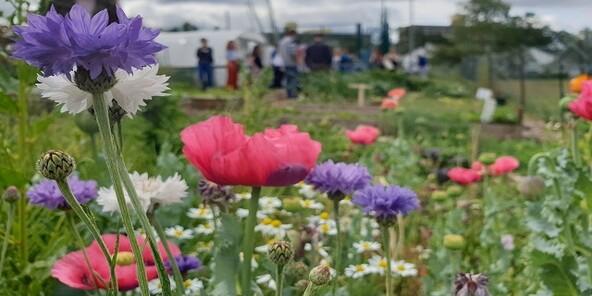 Roehamptonuniversity wild flowers 640